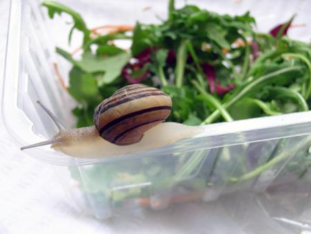 Snailad